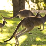 Känguru-Methode Übung Sport Fitness Abnehmen